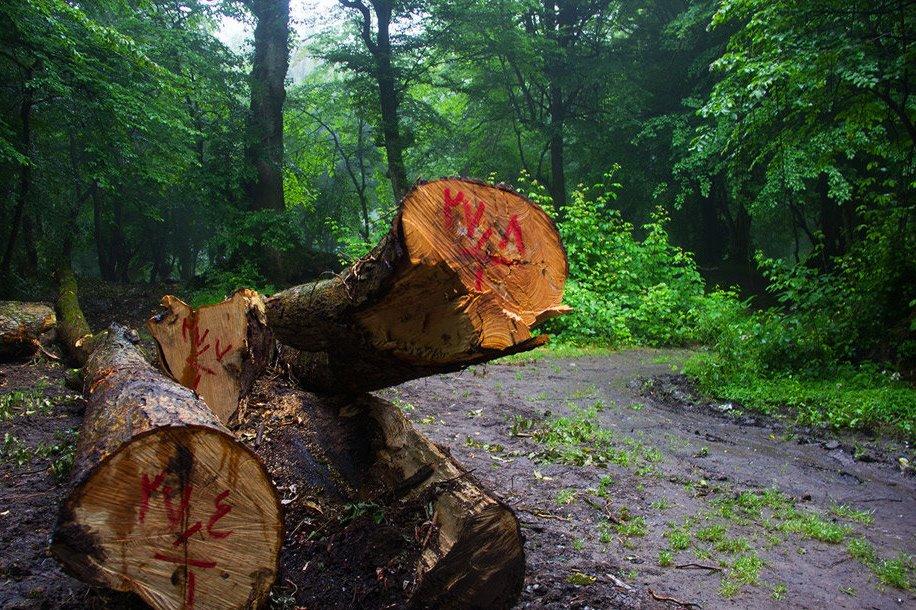 اصلاح تعرفه بهره برداری از درختان جنگلی