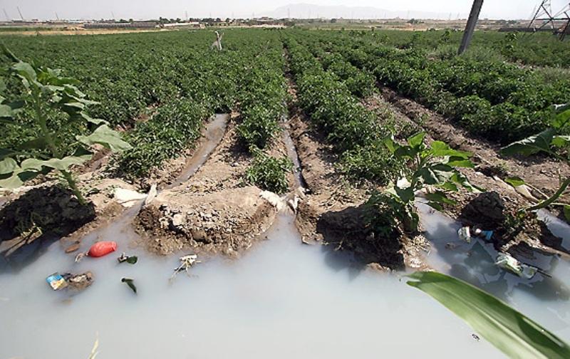 ممنوعیت کشت محصولات کشاورزی با آبهای آلوده در جنوب تهران