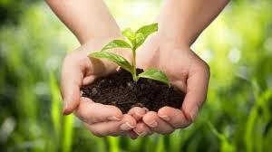 آییننامه اجرایی قانون «حفاظت از خاک» در دستور کار دولت قرار می گیرد